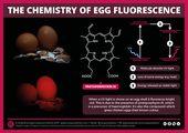 What makes eggs glow under UV light? 2