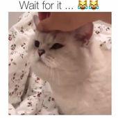 Zehn Gründe, warum jeder eine Katze haben sollte: #cat #catlover #catfacts #ilovecats #cats    – Katzen