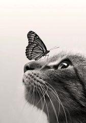 Schwarze und weiße Katze mit Schmetterling auf Nase Stoffblock – ideal für Quilten, Kissen & Wandkunst – kaufen Sie 2, erhalten Sie 1 gratis   – cats