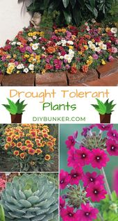 12 Drought Tolerant Flowers and Vegetation That'll Add Colour to Your Backyard