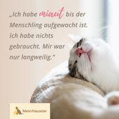 Typische Katze! # Kumpel Haustier #Kätzchen Liebe #Katze # Katzensprüche # Zitate