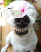 Cute smile of dog with beautiful butterfly