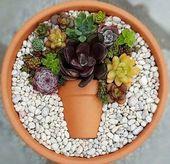 """Mit über 200 wunderschönen Designs, die bereits der Instagram-Herausforderung """"Pot in a Pot"""" unterzogen wurden, finden Sie mit Sicherheit Ihr eigenes inspirierendes Design, das Sie für die Präsentation in Ihrem eigenen Haus oder Garten kopieren können   – Garten"""
