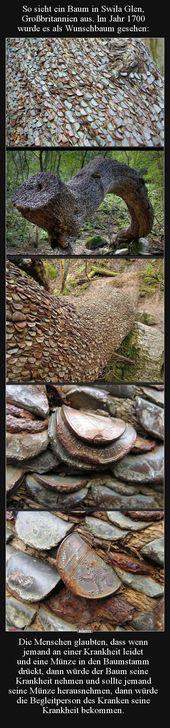 Photo of So sieht ein Baum in Swila Glen, Großbritannien aus Lustige Bilder, Sprüche …