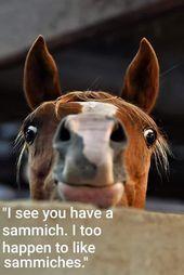 Lustige Pferde Memes Horse Breeds Breeds Horse Lustige Pferdememes Lustige Pferdebilder Lustige Pferde Lustiger Tierhumor