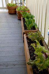 Wachsender Salat auf Ihrer Veranda. Pflanzen Sie die Samen nacheinander in einem Abstand von etwa einer Woche   – all season garden