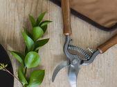 Large Pruning Shears