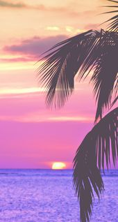 pink palm trees, iPhone Wallpaper