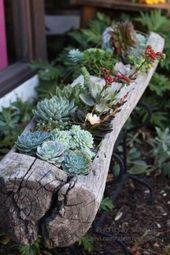 57+ Best Succulent Garden Ideas With Tutorials