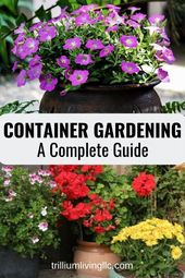 An entire information to profitable container gardening. Study ideas the professionals…