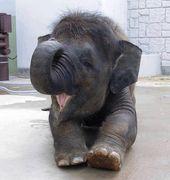 Und von diesem kleinen Elefanten, der möchte, dass Sie einen schönen Tag haben.  – adorable