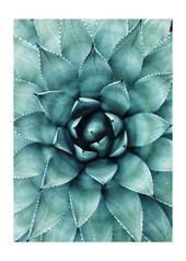 Sukkulente Poster Kaktus Poster Poster Download Natur Fotografie Greenery Sukkulente Druck Wohnzimmer Poster Bilderwand Plakat