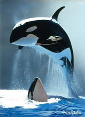 Orca  – Wildlife