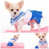 Chihuahua vestido como Sailor Mercury | Sailor Moon News   – Cats DIY