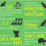 Interessante Fakten über Katzen