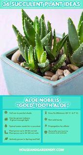 succulent garden care #garden #gardencare 50 Succulent Garden Ideas (Succulent V…