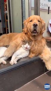 Ein Nickerchen mit einem Freund vertreibt alle Sorgen