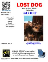Lost Dog Shih Tzu Riverdale Ga United States Dogs Lost In