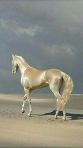 35 Schöne Pferdebilder Und Fotogalerie