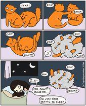 Sollte Ihre Katze in Ihrem Bett schlafen?