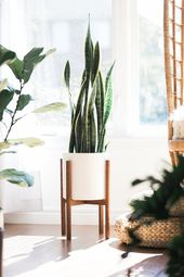 """Mid Century Modern Plant Stand with 10″ Matte White """"Seconds"""" Ceramic Planter"""