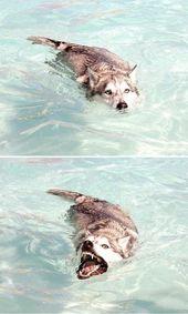 Ich sagte meinem Hund, er könne alles machen. So wurde er ein Krokodil.