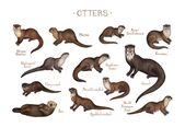 Otters of the World Field Guide Art Print  – Otter