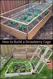 Halten Sie Ihre Erdbeeren von Lebewesen fern, indem Sie einen Erdbeerkäfig bauen! #Angehoben