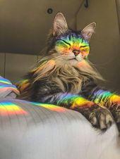 22 Katzen, die wirklich, wirklich schlechte Lebensentscheidungen getroffen haben – #Cats #Choices #cute #Life # …