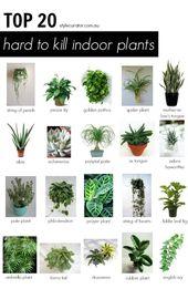 Top 20 schwer zu tötende Zimmerpflanzen l – Stadtgarten – #Garten # schwer