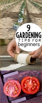 Vegetable Backyard Suggestions for Novices. Superior gardening hacks to your vegetable …