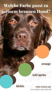 Welche Farbe Passt Zu Meinem Hund Eine Stilberatung Hunde Pferde Und Hunde Hundeverhalten