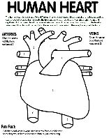 Human Heart coloring page with coded numbers for making some parts ...