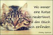 Katzensprüche Spencer – Sprüche & Zitate