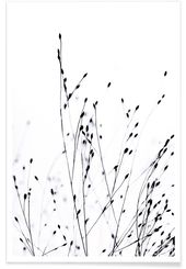 Black Grass als Premium Poster von Monika Strigel | JUNIQE
