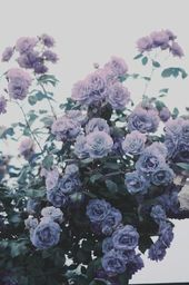 42+ Beauty Aesthetic Flowers Ideas 42+ Beauty Aesthetic Flowers Ideas