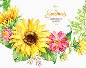 Sonnenstrahlen. Kränze und Blumensträuße. Aquarell Blumen Clipart, Sonnenblumen, gelb, Hochzeit, Grußkarte, gedeihen, diy, Land, Blume, sonnig
