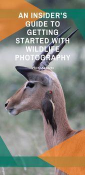 Ein Insider-Leitfaden für den Einstieg in die Tierfotografie   – Photography Tips & Tutorials