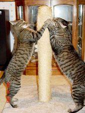 Füttern Sie Ihre Katze: Kennen Sie die Grundlagen der Katzenernährung :: gesunde Katz …