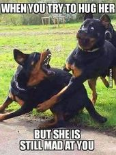 Its Friday lets get Ready (funny animals) – Page 2 of 5