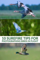 10 todsichere Tipps zum Fotografieren von Vögeln im Flug   – pjc