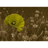 Poppy, photo print East Urban Home Wall Color: Black, Size: 30 cm H x 90 cm W x 0.5 cm D, Color: Baby pink