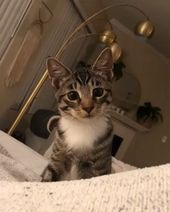 🔊]The daily struggles after owning a cat – lustige Tier videos