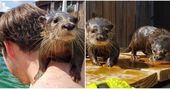 You Can Swim With Cute Child Otters At This Animal Protect In Louisiana