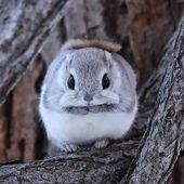 ¿Puedes adivinar qué animal es este? 🤔 – # supongo #Animal # puede …   – roedores