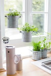 Urban Jungle in the kitchen or spring fresh herbs