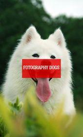 Fotografie Hunde – Hunde