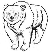 Fiar We Re Going On A Bear Hunt On Pinterest 43 Pins Bear Coloring Pages Bear Drawing