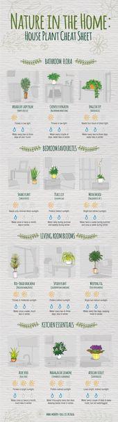 ENDLICH: Ein Spickzettel, der all Ihre Zimmerpflanzen retten wird