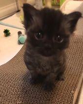 Black cat baby kitty